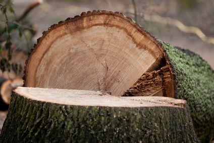 Baumstumpf Entfernen Mit Einer Wurzelstockfrase