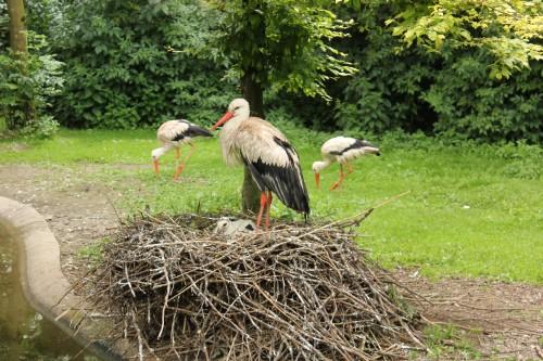 Storch im Tierpark